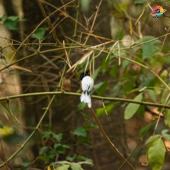 Birding tour of Kolhapur-Panhalgad