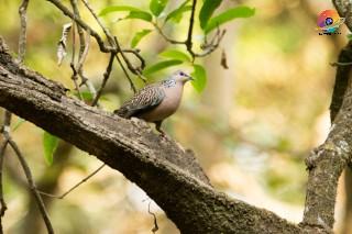best birding lens