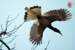birding tour, birding tour companies, bird watching